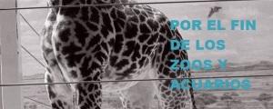 Por el fin de los zoos y acuarios